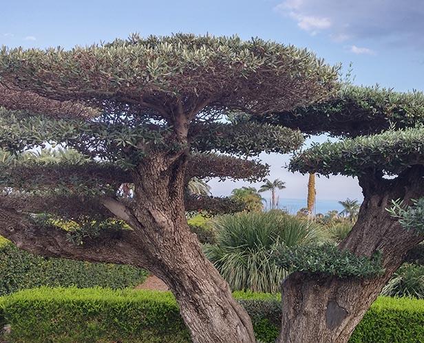 frammenti albero secolare 1